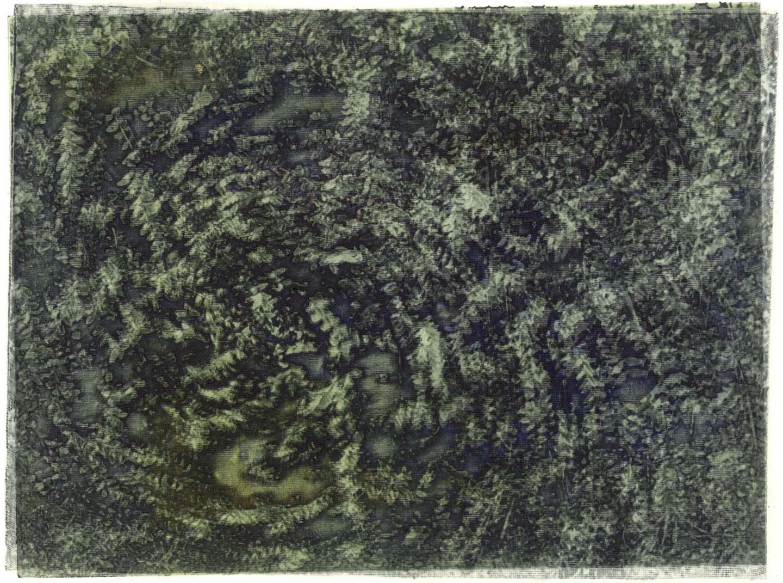 rohini-devasher-copyright-foliage-2004(11)