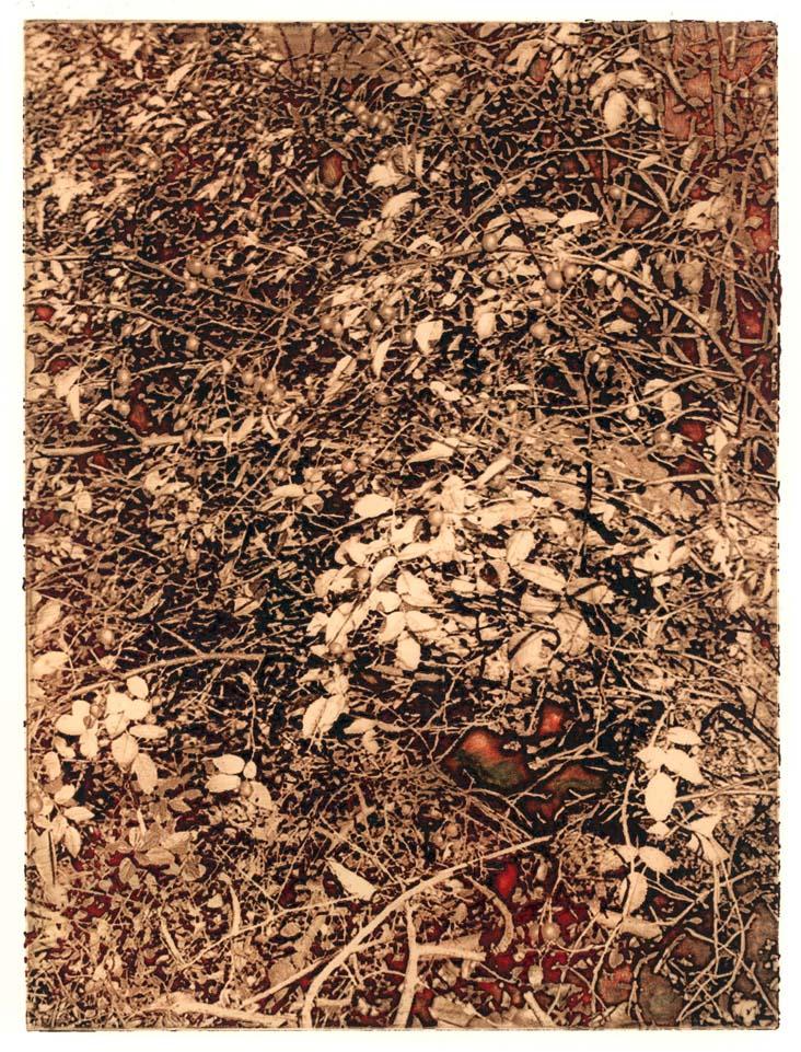 rohini-devasher-copyright-foliage-2004(4)