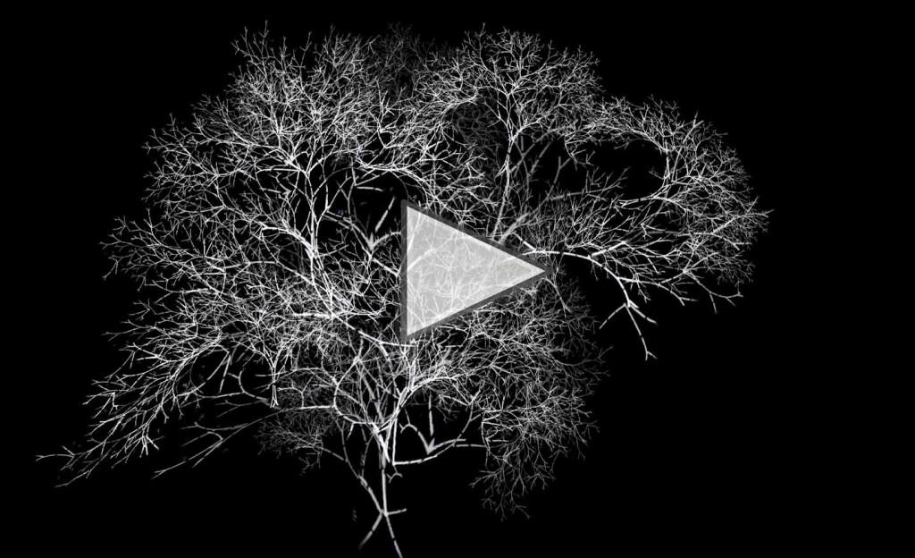 arboreal -rohini devasher - 2011