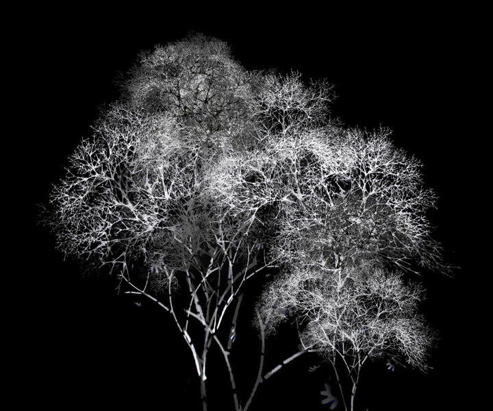 rohini-devasher-copyright-arboreal-prints-2011 (10)