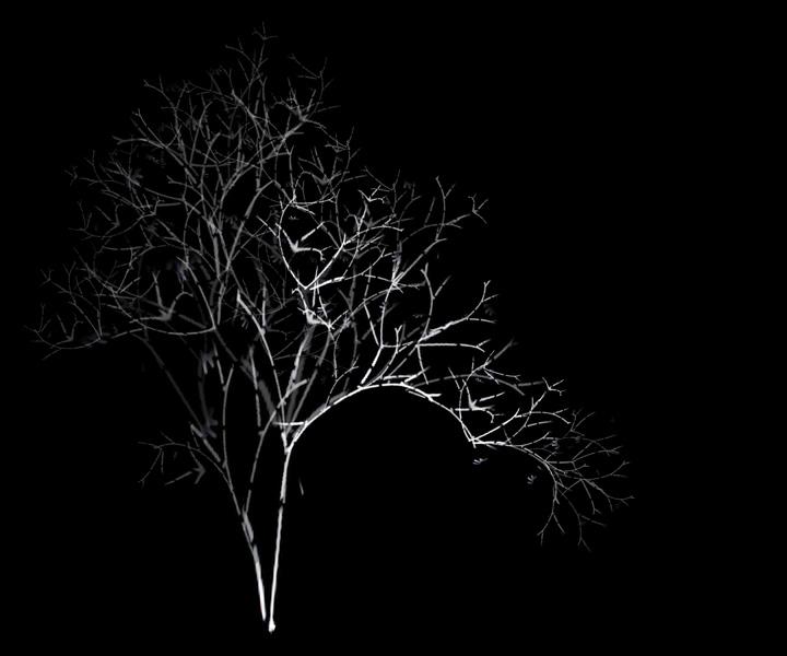 rohini-devasher-copyright-arboreal-prints-2011 (12)