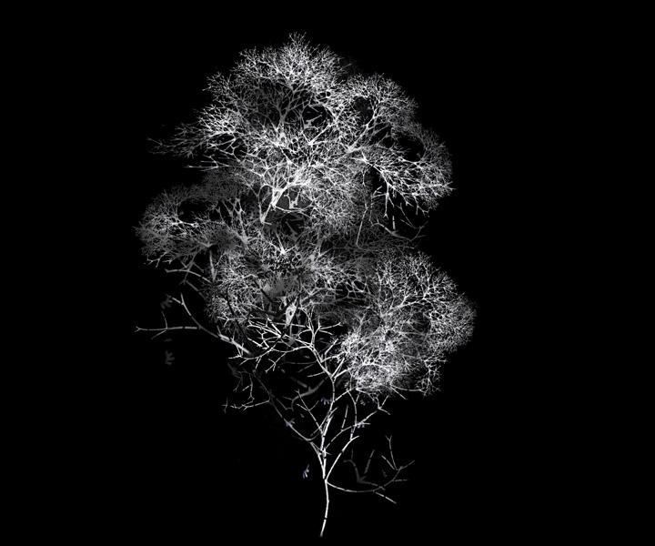 rohini-devasher-copyright-arboreal-prints-2011 (13)