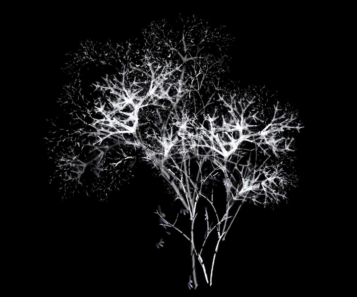rohini-devasher-copyright-arboreal-prints-2011 (14)