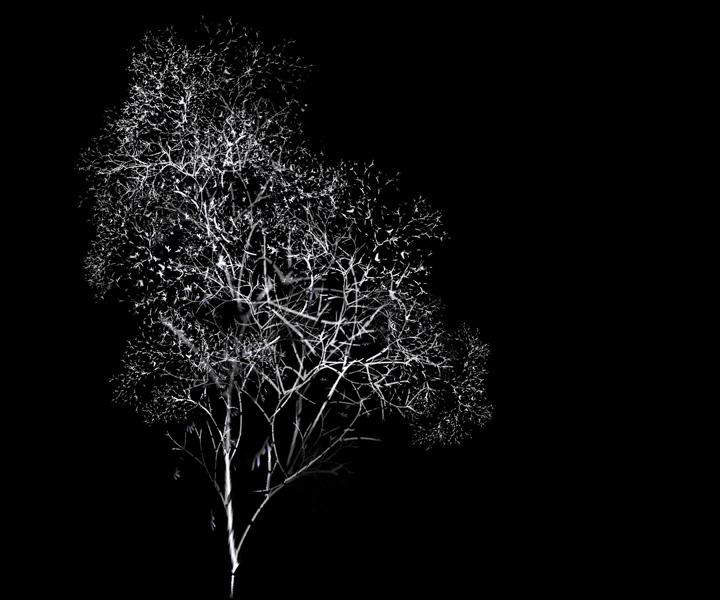 rohini-devasher-copyright-arboreal-prints-2011 (15)