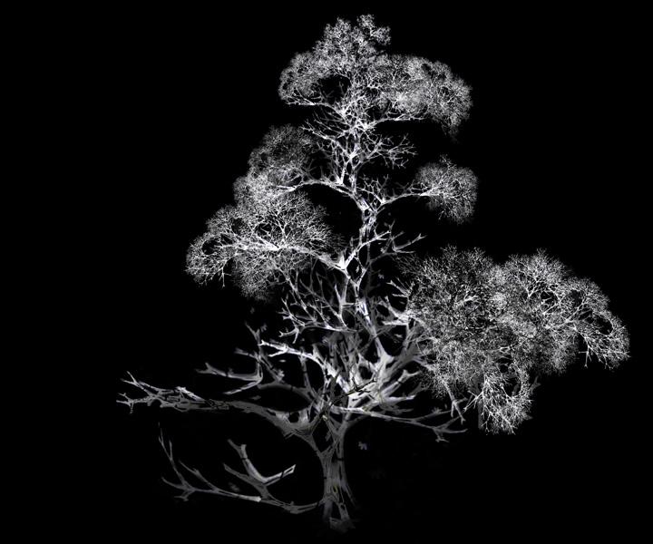rohini-devasher-copyright-arboreal-prints-2011 (16)