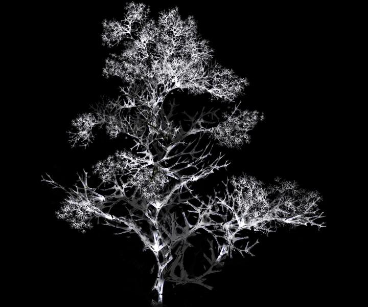 rohini-devasher-copyright-arboreal-prints-2011 (17)