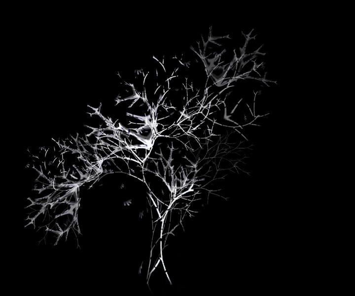 rohini-devasher-copyright-arboreal-prints-2011 (19)