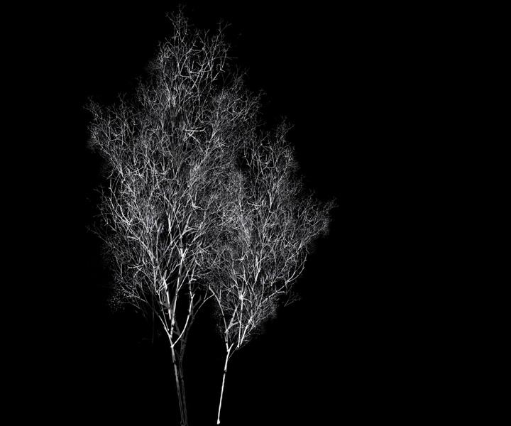 rohini-devasher-copyright-arboreal-prints-2011 (2)
