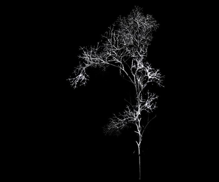 rohini-devasher-copyright-arboreal-prints-2011 (20)