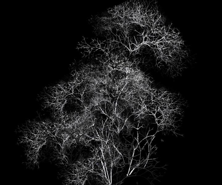 rohini-devasher-copyright-arboreal-prints-2011 (3)