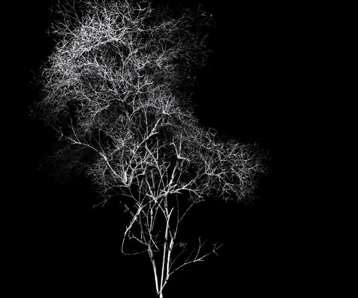 rohini-devasher-copyright-arboreal-prints-2011 (4)