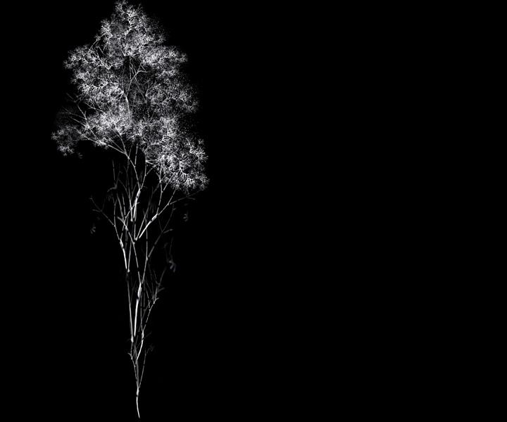 rohini-devasher-copyright-arboreal-prints-2011 (5)