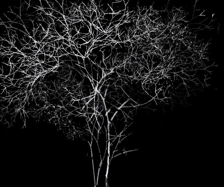 rohini-devasher-copyright-arboreal-prints-2011 (8)