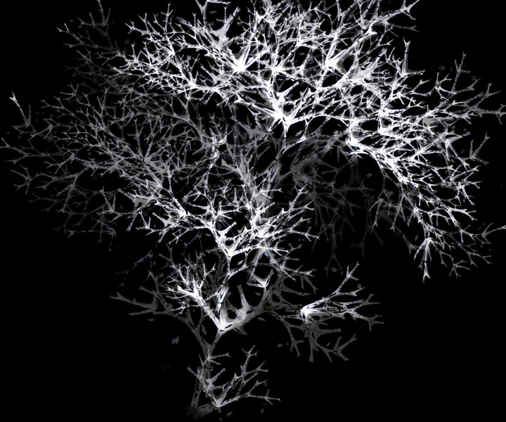 rohini-devasher-copyright-arboreal-prints-2011 (9)