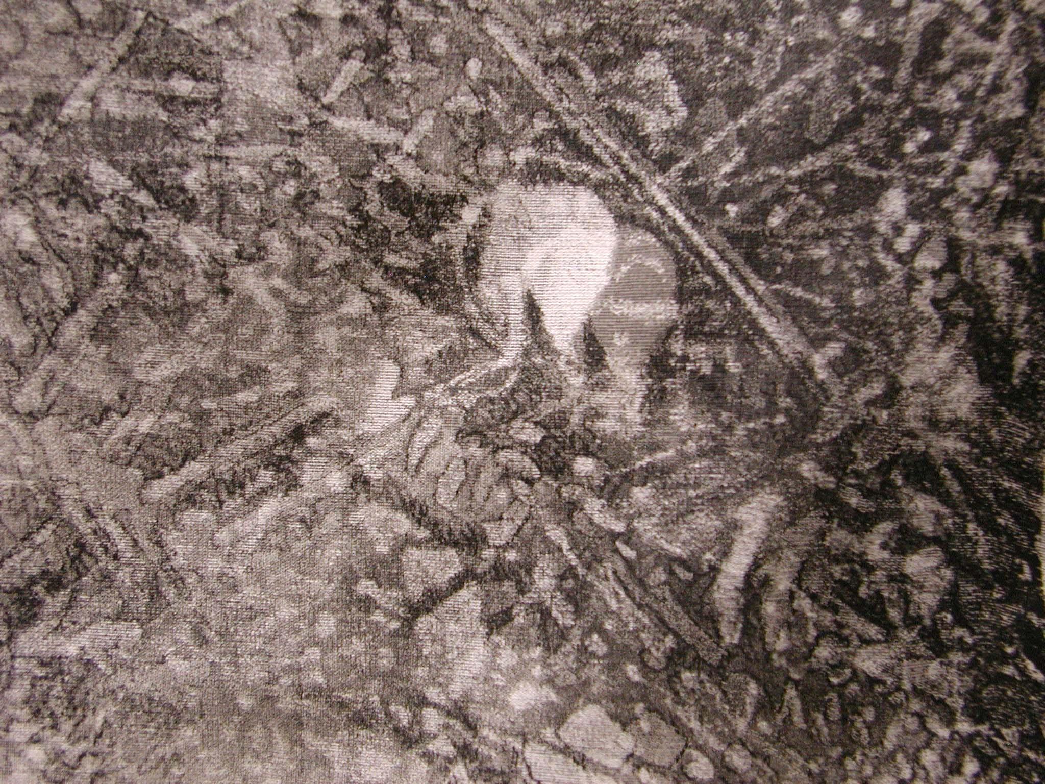 rohini-devasher-copyright-thicket-2004 (detail 2)