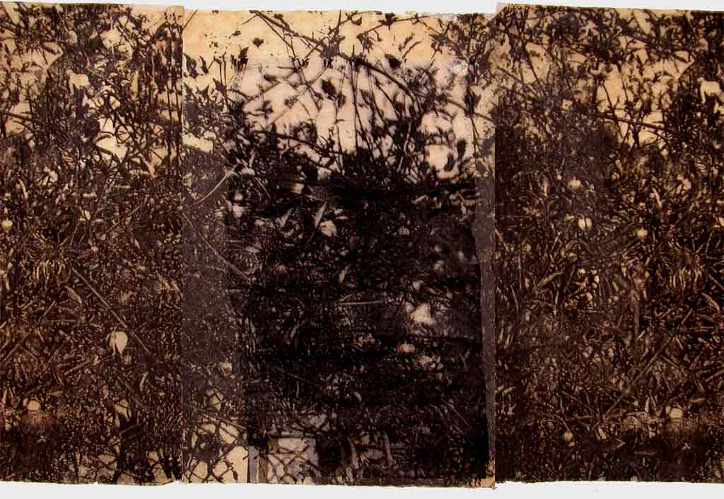 Thicket-Detail