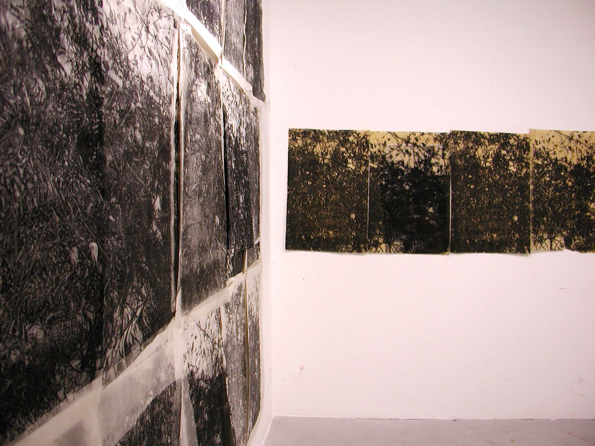 rohini-devasher-copyright-thicket-2004 (installation view)