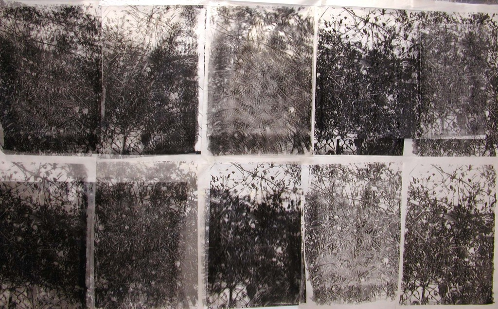 thicket-rohini devasher - 2004
