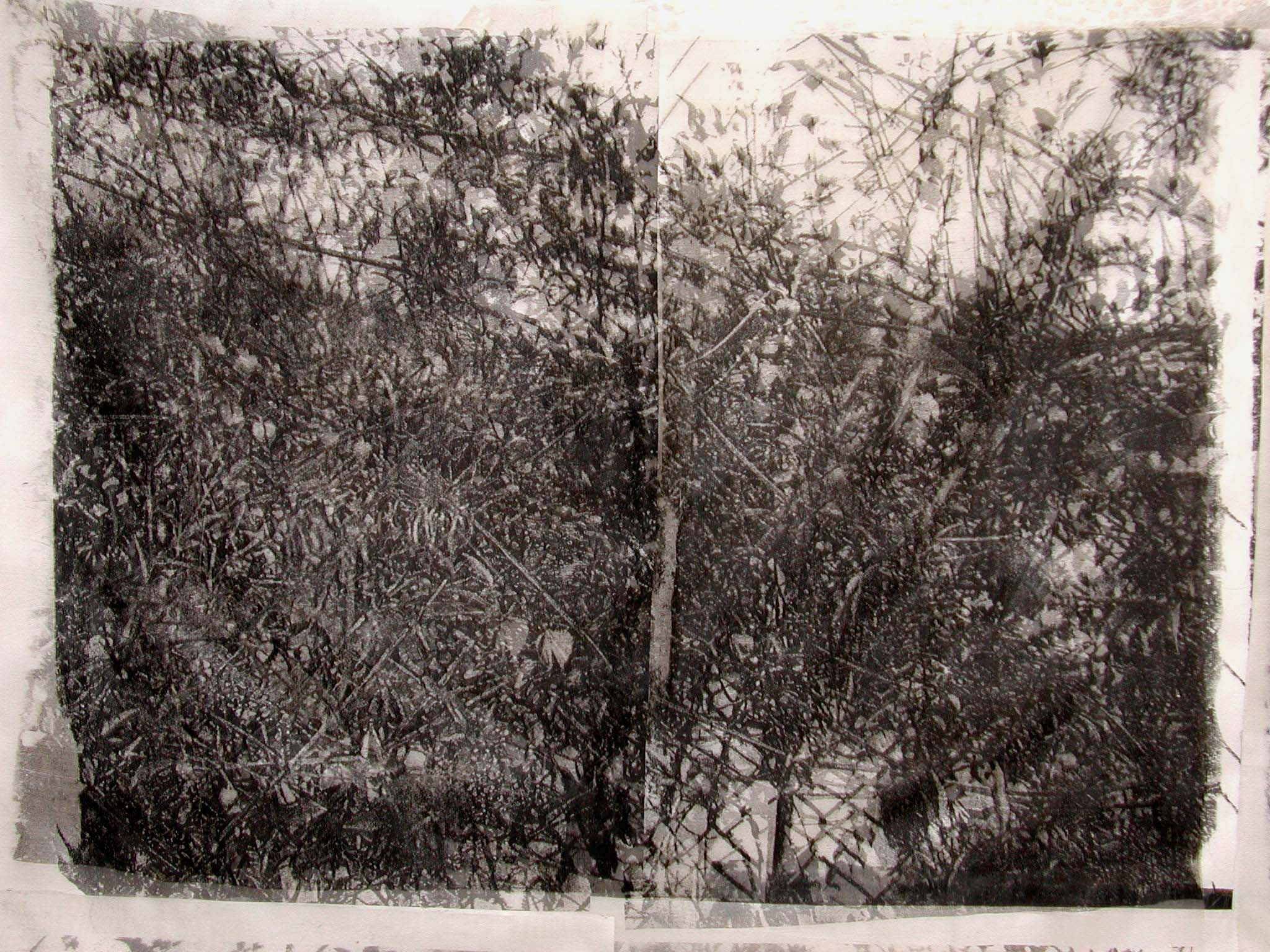 rohini-devasher-copyright-thicket-variation-2004