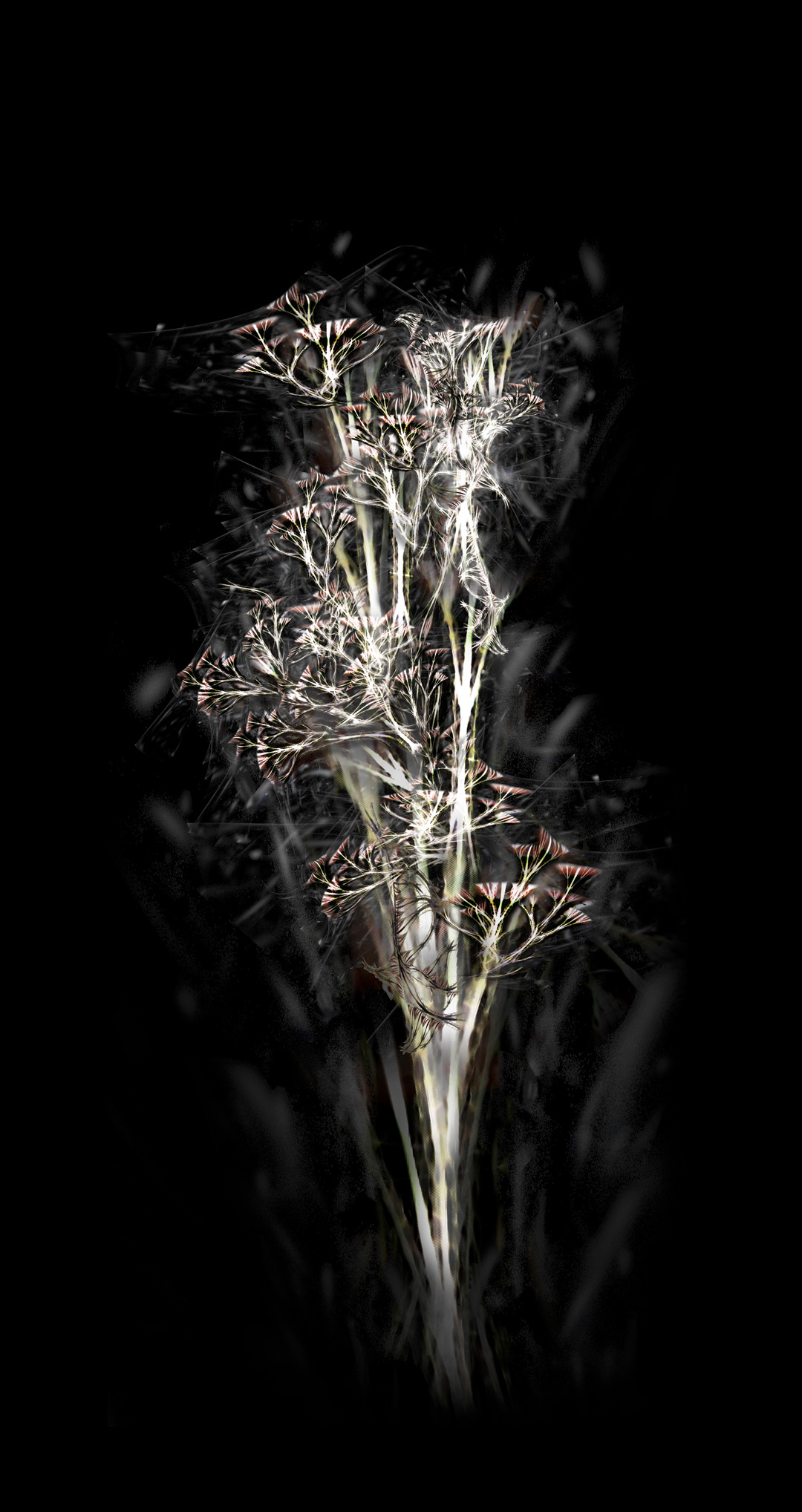 Bone tree - archival pigment prints - rohini devasher 2013 (1)
