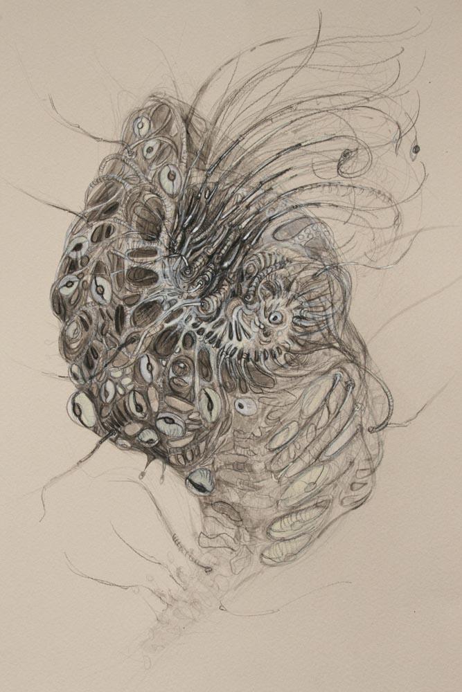 rohini-devasher-copyright-breed-drawings-2009 (2)