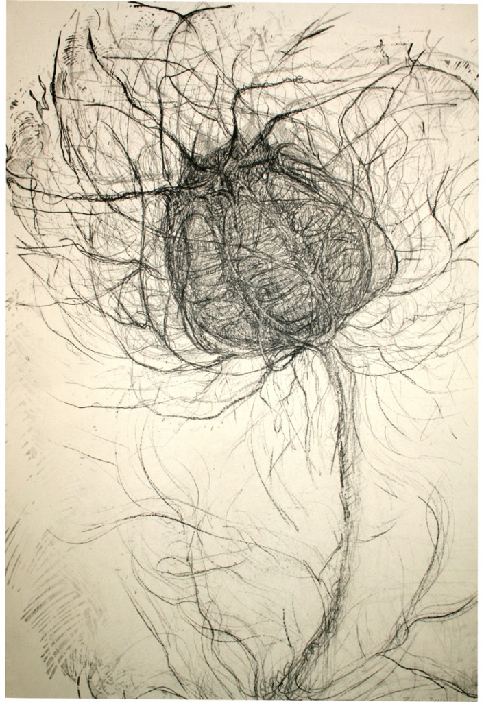 love-in-the-mist, offset lithograph 2005 (1)