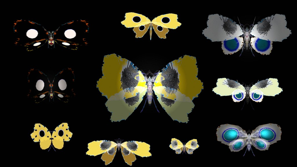Cabinet 3 - LEPIDOPTERA (BUTTERFLY) 2