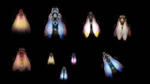 Cabinet 5 - ORDER  HYMENOPTERA (WASP & BEE)